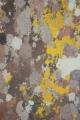 Baumrinden Farben